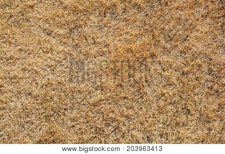 Texture of brown grass dried on sunlight. Dry grass texture background