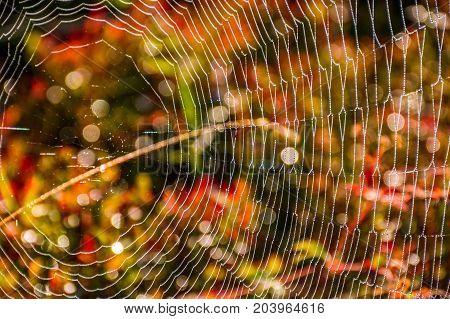 Web On Beautiful Foliage Bokeh