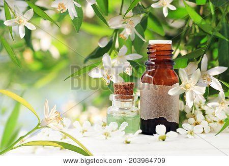 Neroli (orange) blossom perfume. Citrus essential oil bottles, spring flowering tree with white aroma flowers and green freshness.