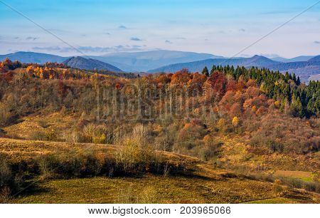 Forest On A Hill In Front Of A Mountain Ridge