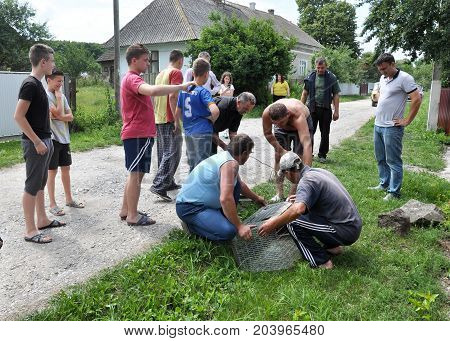 Shmankivchyky - Ukraine - 29 June 2016. The villagers caught an unknown animal which is popularly called Chupacabra.