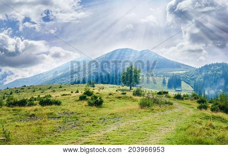 Carpathian landscape with mountain meadow mountain hut and single deciduous tree in the foreground against the background mountain range and sky with clouds