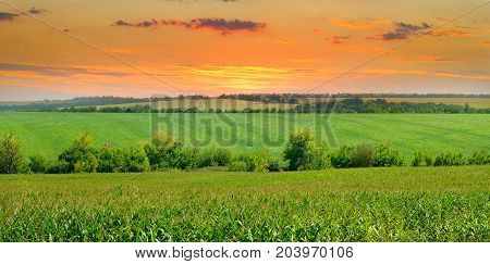 beautiful sun rise over the corn field