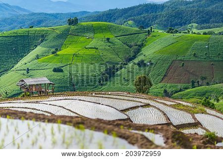 little hut and Rice terrace in a cloudy lighting surrounded by trees and mountains.