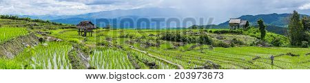 A panorama view of A farmer is walking along his rice field with little hut and Rice terrace in a cloudy lighting surrounded by trees and mountains with a raining storm in the background at Pa Bong Piang near Inthanon National Park and Mae Chaem Chiangmai
