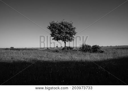 A lonely tree and a shadow on the horizon in the field. Background for web page design.