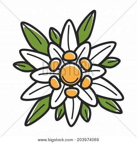 Flower bloom of Australian nature plant. Vector isolated flat icon of blooming blossom