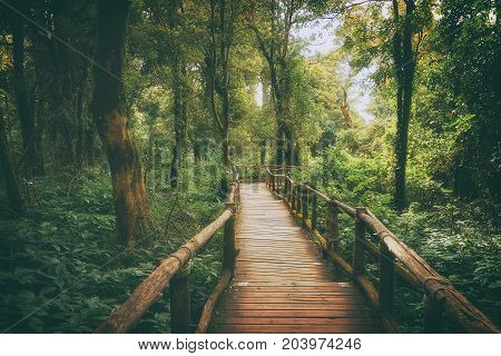 Doi Inthanon National Park Chiang Mai Thailand