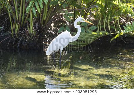 Great blue heron in the water is catching a frog