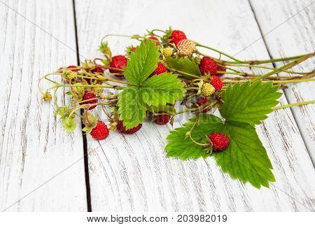 Bunch Of Wild Strawberry