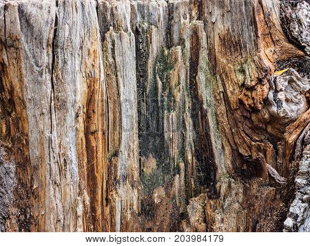 Texture old tree wood, abstract background, cracked wooden, cross section, annual growth ring