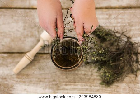 Homeopathic alternative medicine top view. Ecology background, preparation healthy ingredient for medical therapy focus on foreground