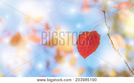 Autumn bright background with red aspen leaves