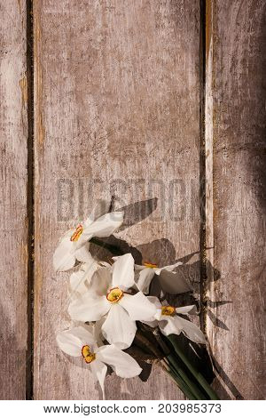 Narcissuses on rustic wooden background top view. Beautiful spring. White flower bouquet present for lady with free space, International women's day, morning freshness, tenderness concept