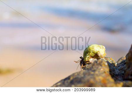 Hermit Crab on a tropiacl beach. Phuket Thailand