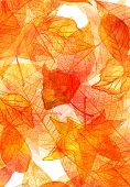 An autumn background with vibrant watercolor leaves. A3, A4 or like poster, invitation, or greeting card backdrop with fall motifs poster