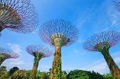 Gardens by the bay with blue sky at Singapore poster