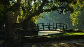 Little wooden bridge on first sunrays at morning in Topcider park, Belgrade, Serbia poster