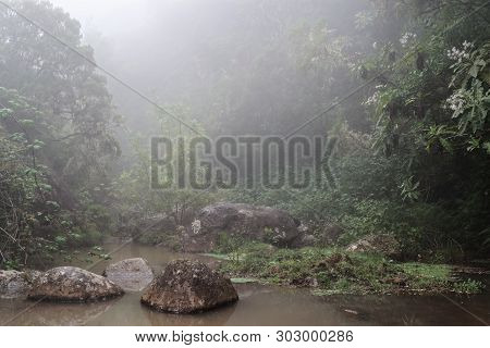 Nature Scene Of A Fog In A Forest. Taken On The Way Along Levada Do Risco In Lombo Do Doutor On Made