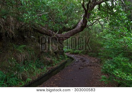 Hiking Trail In The Nature Along Levada On Portuguese Island Of Madeira