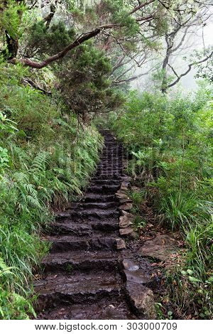 Stone Staircase On The Way To Risco Fountain. Portuguese Island Of Madeira