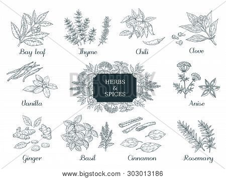 Hand Drawn Spices. Indian Food Herbs And Vegetables, Italian And Asian Ingredients, Chili Thyme And