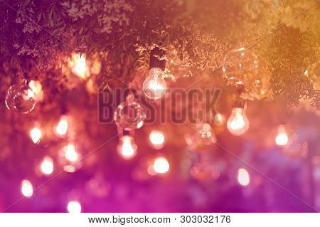 Stylish Toned Photo Of String Lights Hanging On Tree In The Garden At Evening Time. Fashion Decorati