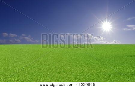 Bright Sun Field