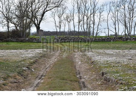 Dirt Road By Spring Season In A Plain Grassland At The Swedish Island Oland