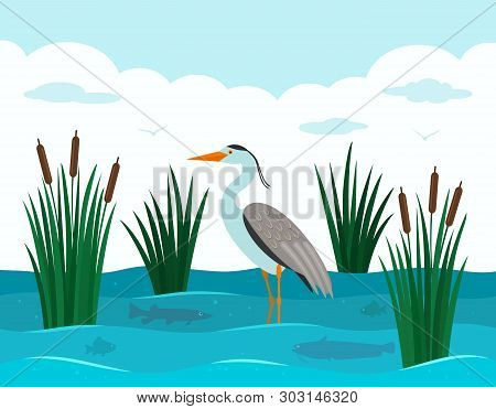 An Elegant European Heron Stands In A Pond With Reeds And River Fish. Landscape Pond. Flat Vector Il