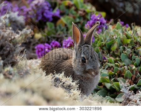 Wild Little Rabbit Biting The Flowers On A Rocky Cliff