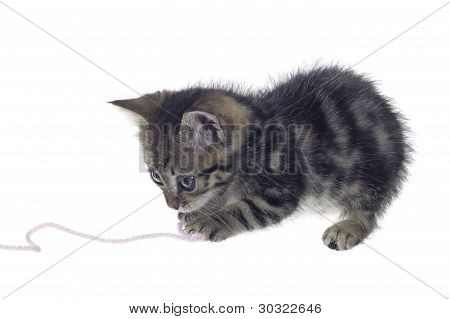Kitten Playing With Woolen Twine