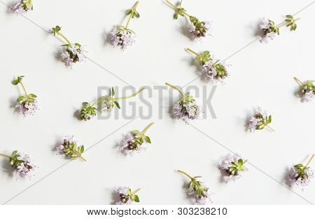 Floral, Pattern, Botanical Composition. Pink Thyme Flowers Isolated On White Table Background. Style