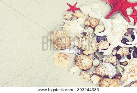 Seashells And Red Seastars On The Sand, Summer Beach Background With Copy Space For Text