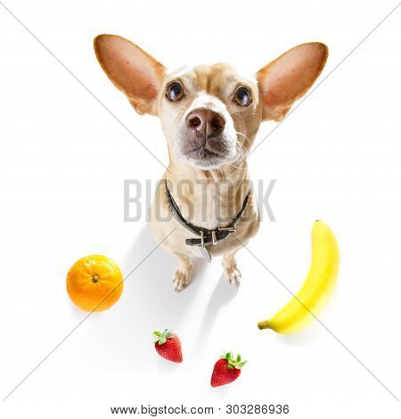 Hungry Dog With Vegan Healthy Fruit