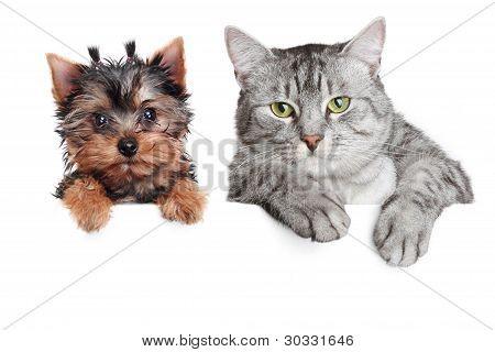 Katze und Hund, isoliert auf weißem Hintergrund