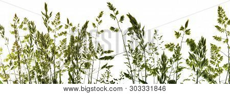 green flowering grass - shape isolated on a white background