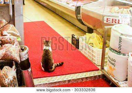 Cat Sitting At The Entrance To The Butcher Shop In Istanbul, Turkey
