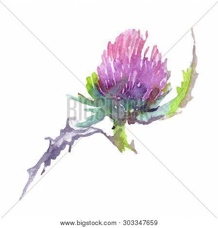 Thistle Floral Botanical Flower. Watercolor Background Illustration Set. Isolated Thistle Illustrati