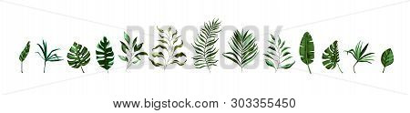 Collection Of Tropical Greenery Leaf Plant Herbs Leaves Monstera Palm Spring Flora In Watercolor Sty