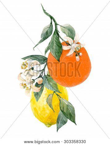Beautiful Illustration With Watercolor Citrus Fruits Orange Lemon