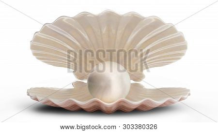 Sea Shells With Pearl Inside. Gem, Womens Jewelry, Nacre Bead. For Your Banner, Poster, Logo. Sea Sh