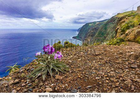 Flowers On Coast In Boaventura - Madeira. Portugal