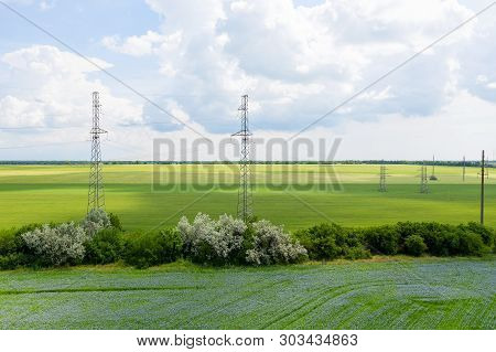 Blooming flax. Field with furrows. Blue flax flowers in field on green background with bird's-eye view. Concept of eco-friendly agriculture poster