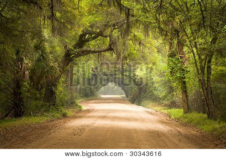 Charleston SC Dirt Road Forest Botany Bay Plantation Spanish Moss Edisto Island Deep South Live Oak Trees poster