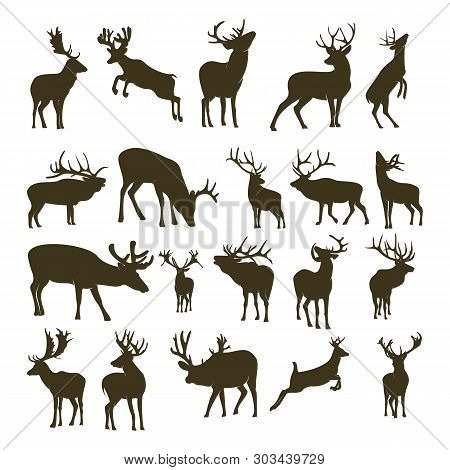 Set Of Deer Logo Design Icon Symbol. Deer Vector. Deer Silhouette