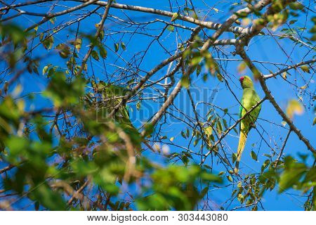 Image Of Vernal Hanging Parrot On Tree.