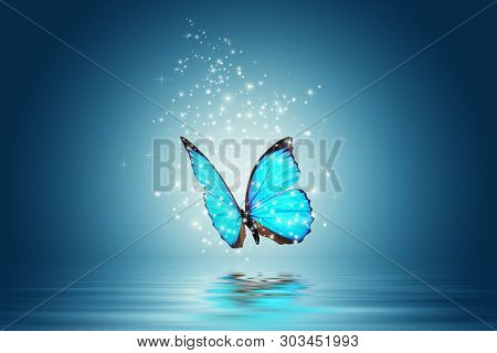 A Blue Magic Butterfly Flies Over Water