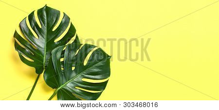Monstera Leaves On Pastel Yellow Background. Flat Lay, Top View, Copy Space. Summer Background, Natu