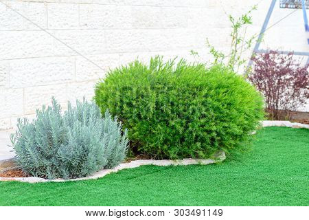 Landscaped Format, Yard With Garden Design.young Green Fresh Bushes Near The House, Front Yard. Land